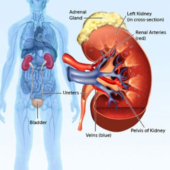 Hereditary Kidney Cancer: Part 1